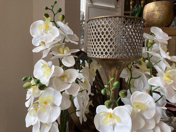 Orchidea - ako sa správne o ňu postarať